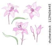 ink  pencil  vector lily sketch.... | Shutterstock .eps vector #1129606445