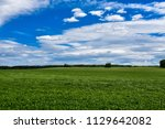 spring meadow and forest... | Shutterstock . vector #1129642082