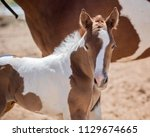 mom and baby paint horses | Shutterstock . vector #1129674665