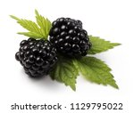 group of fresh blackberries... | Shutterstock . vector #1129795022