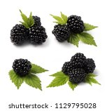 set of four compositions of... | Shutterstock . vector #1129795028