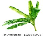 green leaves of a banana palm... | Shutterstock . vector #1129841978