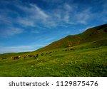 horses at mountain meadows ... | Shutterstock . vector #1129875476