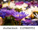 colorful lotus in the basin.   Shutterstock . vector #1129885952