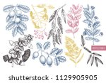 vector collection of myrtle... | Shutterstock .eps vector #1129905905