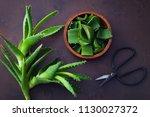 aloe vera on dark background  ...   Shutterstock . vector #1130027372