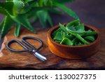 aloe vera on dark background  ... | Shutterstock . vector #1130027375