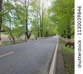 summer woods road  | Shutterstock . vector #1130039846