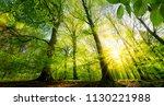 scenic forest of fresh green... | Shutterstock . vector #1130221988