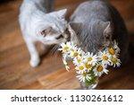 Summer Fragrant Bouquet. Cat...