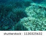 sea grass under the aegean sea... | Shutterstock . vector #1130325632