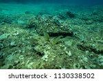 fish under the aegean sea off... | Shutterstock . vector #1130338502
