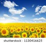 field of sunflowers and sun  | Shutterstock . vector #1130416625