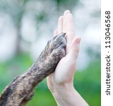 Stock photo give me five dog pressing his paw against a woman hand 113046568