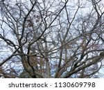 photo silhouettes of tree... | Shutterstock . vector #1130609798