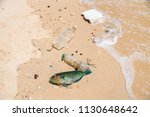symptoms approaching ecological ... | Shutterstock . vector #1130648642