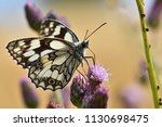 beautiful colorful butterfly...   Shutterstock . vector #1130698475