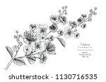 sketch floral botany collection.... | Shutterstock .eps vector #1130716535
