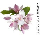 magnolia bouquet isolated... | Shutterstock .eps vector #1130716796