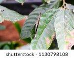 beautiful exotic buterfly | Shutterstock . vector #1130798108