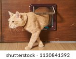 Stock photo yellow cat is walking through the cat flap door 1130841392