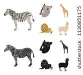 african zebra  animal koala ... | Shutterstock . vector #1130851175