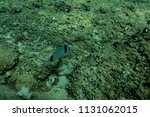 fish at the bottom of the... | Shutterstock . vector #1131062015