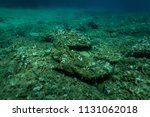 fish at the bottom of the... | Shutterstock . vector #1131062018