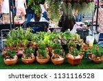 artificial small decorative... | Shutterstock . vector #1131116528