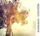 vintage nature background | Shutterstock . vector #113114536