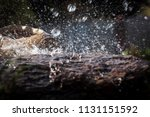 wet stone and decorative... | Shutterstock . vector #1131151592
