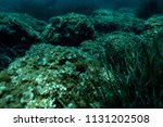 sea grass at the bottom of the... | Shutterstock . vector #1131202508