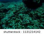 the bottom of the aegean sea... | Shutterstock . vector #1131214142