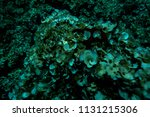 the bottom of the aegean sea... | Shutterstock . vector #1131215306