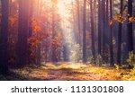 tranquil autumn landscape. fall ... | Shutterstock . vector #1131301808