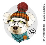vector dog with glasses ...   Shutterstock .eps vector #1131333092