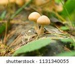 little cute mushrooms in the... | Shutterstock . vector #1131340055