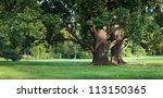 Strong Old Green Oak Tree In...