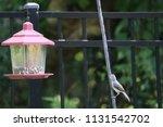 chickadee titmouse songbird... | Shutterstock . vector #1131542702