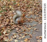 squirrel hiding meal in a park | Shutterstock . vector #1131559235