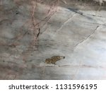 marble texture background | Shutterstock . vector #1131596195