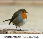 Robin  Yellow European Robin ...