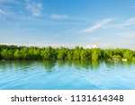 Mangrove Forest In High Tide O...