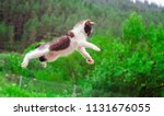 Stock photo cute cat flying and jumping in the nature closeup 1131676055