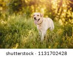 active  smile and happy... | Shutterstock . vector #1131702428