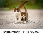 Homeless Cat Mother With A...