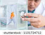 asian doctor diagnose fish in... | Shutterstock . vector #1131724712