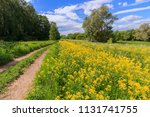 typical landscape of the middle ...   Shutterstock . vector #1131741755