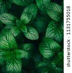 green mint leaves pattern... | Shutterstock . vector #1131755018