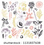 vector collection of hand drawn ... | Shutterstock .eps vector #1131837638